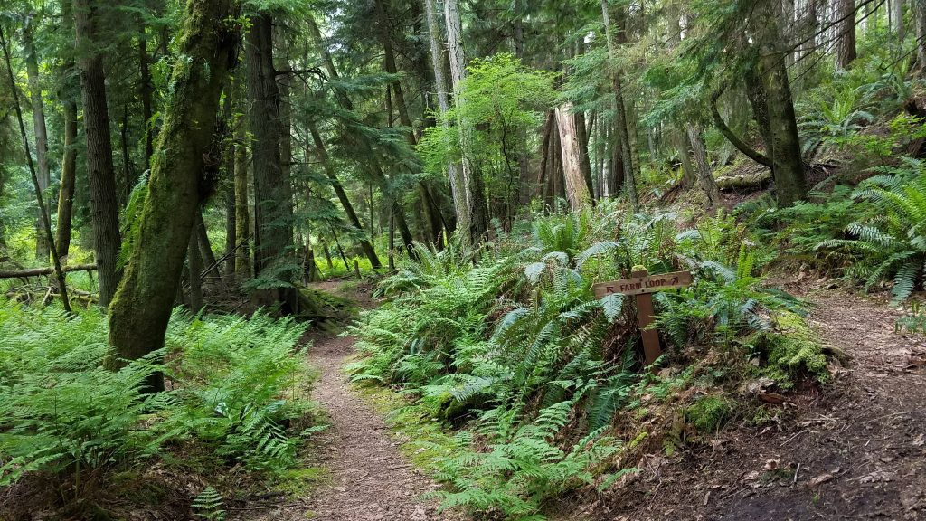 KWW whidbey woods